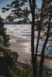 Planos maré quadro por árvores altas Rocha branca, BC, Canadá imagem de stock