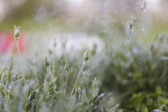 Planr και βροχή, ψεκασμός Στοκ Εικόνα