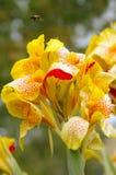 Plans d'abeille à laisser tomber vers le bas pour une tache de nectar savoureux Photo stock