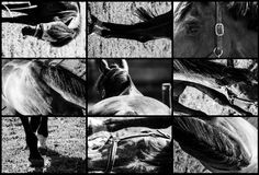Plans rapprochés des chevaux Photographie stock