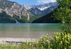 Plansee summer landscape (Austria). Royalty Free Stock Photography