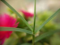 Planté Стоковые Изображения RF