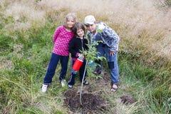 Planté et arrosé Photo libre de droits