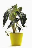 Plant Stock Images