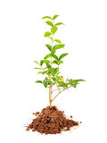 Plant Stock Photos