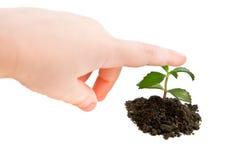 Plant Royalty Free Stock Photos