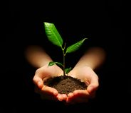 Plant. Hands holding sapling in soil on black Stock Photos