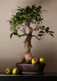 Plant Stock Photography