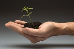 Plant. Small plant in soil on a hand close up Stock Photos