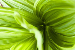 Plant. Green vital plant close up Royalty Free Stock Photography