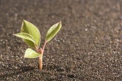Plant Royalty Free Stock Image