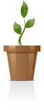 Plant. Illustration of a growing plant Stock Photos