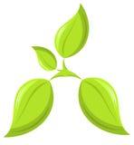 Plant Royalty Free Stock Photo