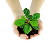 Plant. In a hand isolated on white background Stock Photos