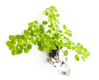 Plant Royalty Free Stock Photo