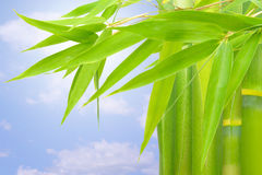 Plant. Green bamboo in a field in the morning Royalty Free Stock Photos