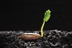 Plant. Young plant growing from seed Royalty Free Stock Photography
