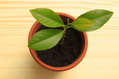 Plant. A plant in a flowerpot stock image