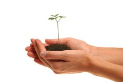 Plant. Woman?s hands holding young plant Royalty Free Stock Photos