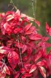 Plant1 Royalty-vrije Stock Foto