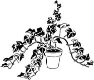 Plant 11 Stock Image