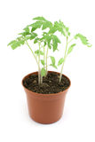 Plant Royalty Free Stock Photos