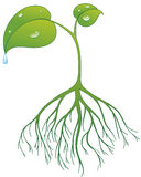 Plant. Vector illustration Plant with root and drops Stock Illustration