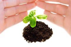 Plant Stock Image