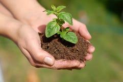 Free Plant Royalty Free Stock Photos - 5421868
