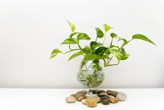 Plant. In a glass Stock Image