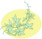 Plant. Vector file with fine details of plant, consist 4 layers by names Stock Photos