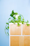 Plant. Classic cupboard with green plant Royalty Free Stock Photo