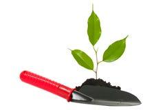 Plant. An image of a green plant and a garden shovel Stock Photos