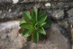 Plant. View from above of a green plant growing from area of asphalt and concrete. Shallow depth of field Royalty Free Stock Photos