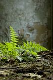 Plant in abandoned building Stock Photos