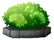 A plant above a stone Royalty Free Stock Image