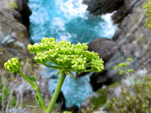 Plant above the water Stock Photo