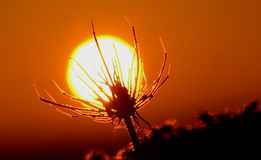 Plant is absorbing the sun Royalty Free Stock Photo