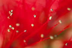 Plant abstract Royalty Free Stock Photo