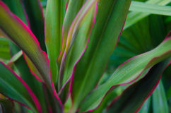Plant abstract soft focus Stock Photography