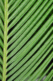 Plant abstract texture Royalty Free Stock Photography