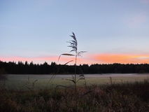 Plant against of blue sky at sunrise Stock Photography