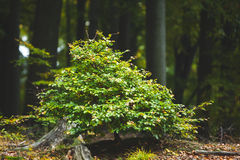 Plant against tree trunks in the forest Royalty Free Stock Photography