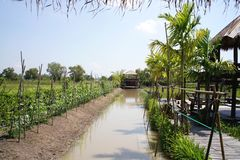 Plant agriculture organic farm in thailand stock photography