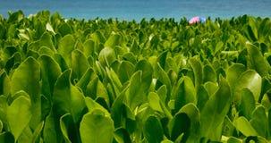Plant amd paraplu op de oceaan Stock Foto's