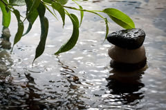 Free Plant And Pebbles With Waterdrop And Ripples Royalty Free Stock Photos - 18830938