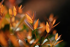 Plant And Red Leaf Royalty Free Stock Photo
