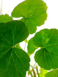 Plant angle from below. Green Plant angle from below, Silhouette Royalty Free Stock Image