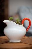 Plant in antique jug Stock Photo