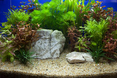 Plant aquarium. Artificial aquarium decorated with plants and sandstones Stock Image